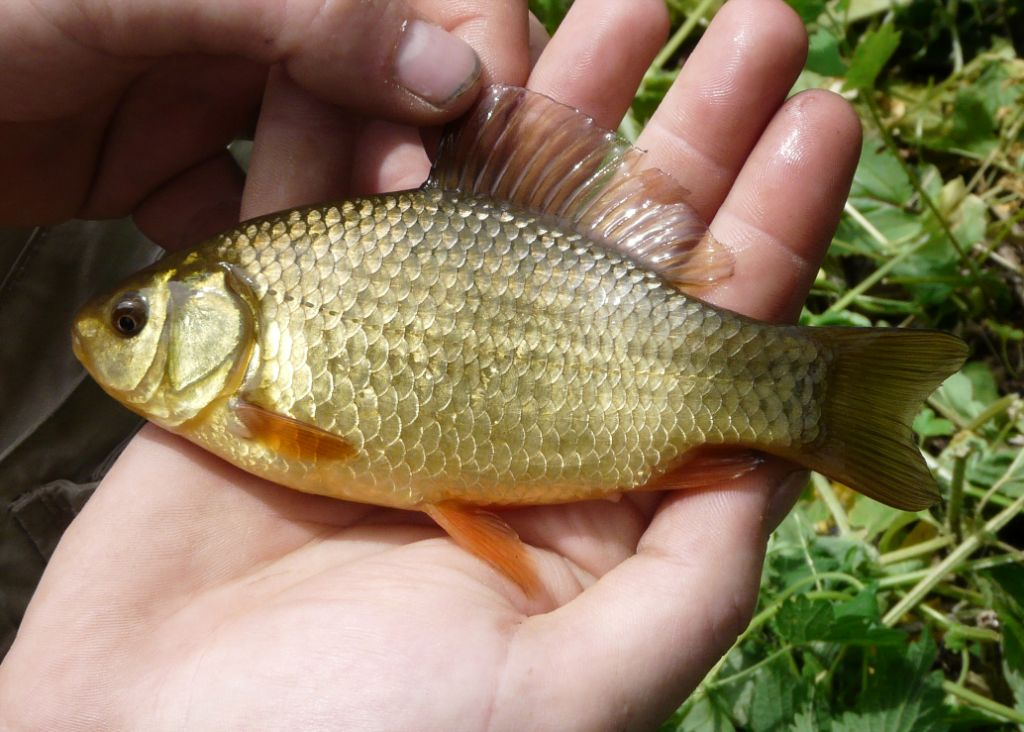 A crucian in hand is worth two in the water