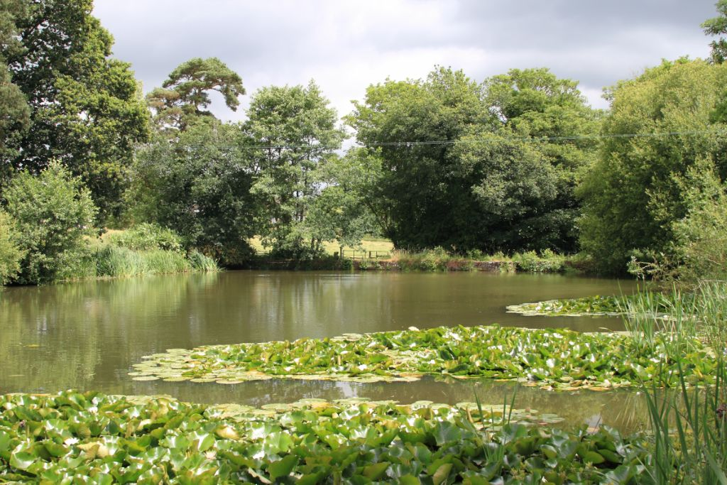 A small pond, the Upper Saxon Pond in fact.