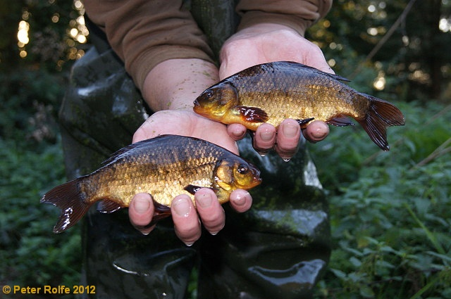 Crucian Carp Fishing In Yorkshire