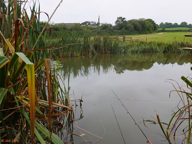 A tiny swim on a field-pond of under half-an-acre