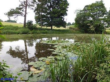 Pete's Ponds